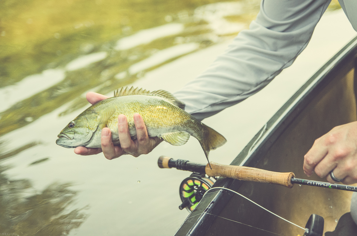 Indiana fly fishing for Fish in indiana